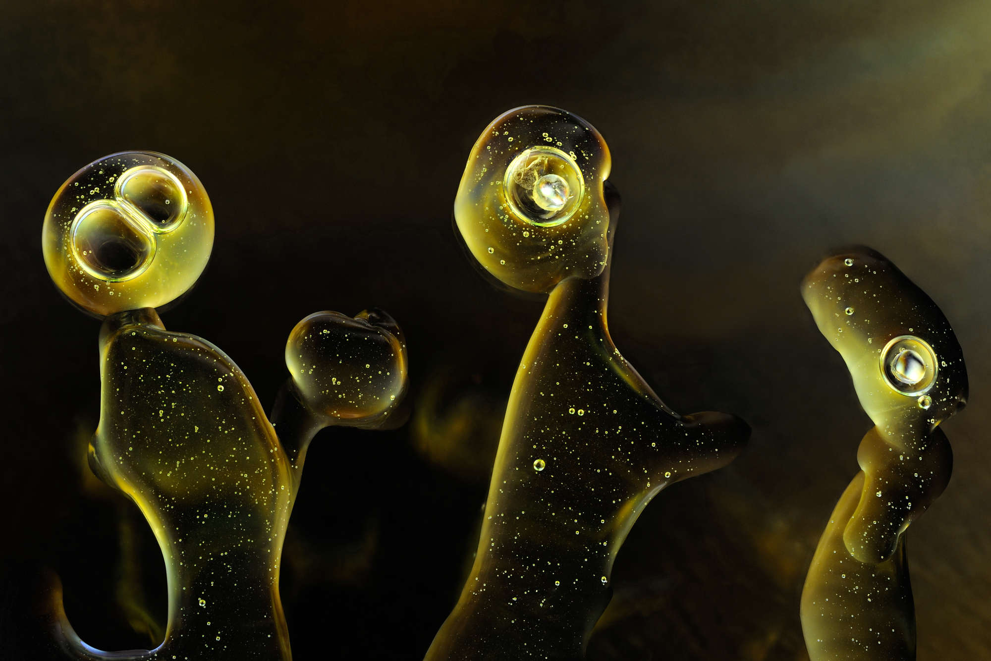 Life Tales - Creatures Collection - Light Forms Art Photography